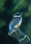 Kingfisher, oil pastel