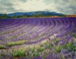 The Lavender Field, 1st in a Series