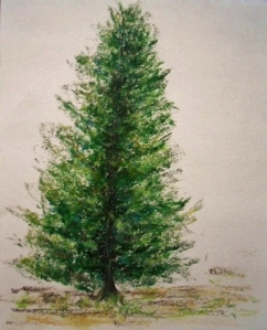 Final Sketch of Pine Tree