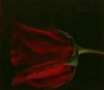 Red Rose Series #1