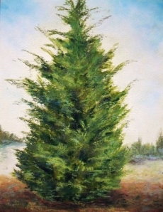 Leyland Cypress, Day 7